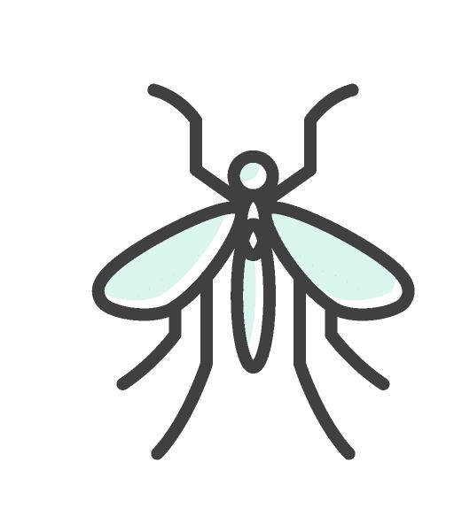 הדברת יתושים בירושלים